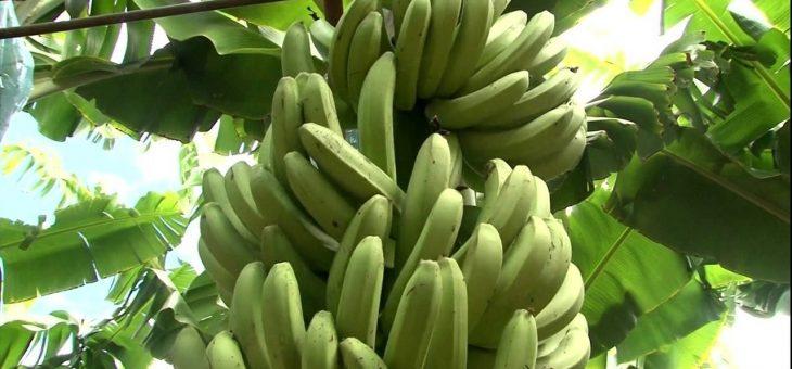 Encontro em Jesus atrás da bananeira